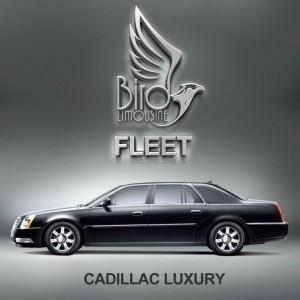 Bird Limousine Cadillac