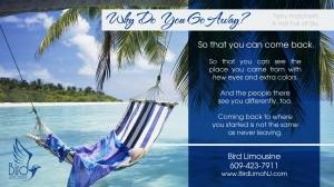 Bird limousine vacation car rentals